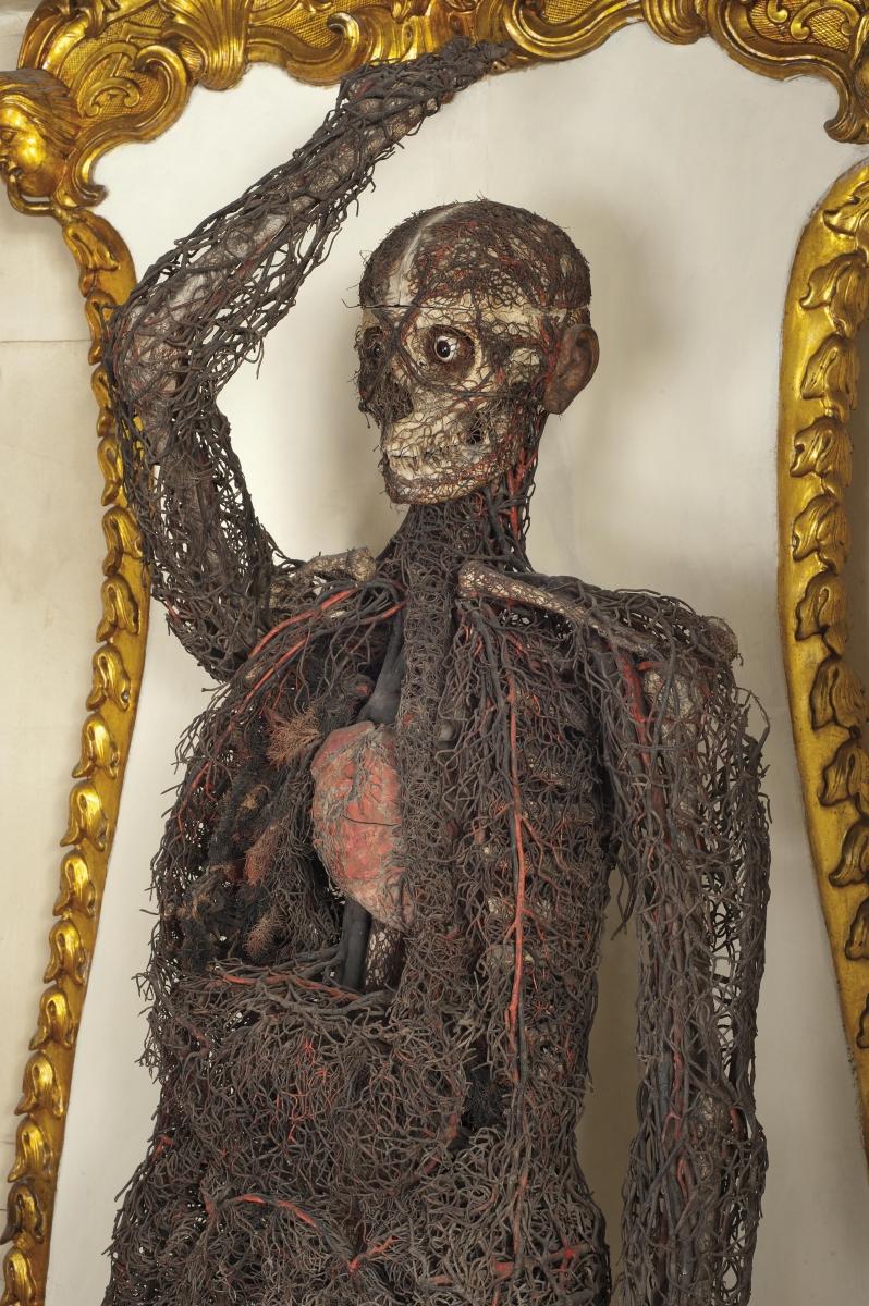 Macchina anatomica donna