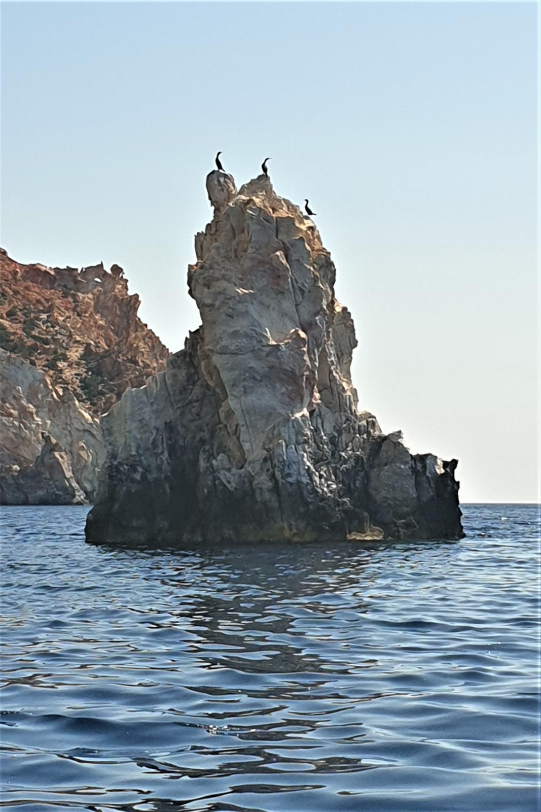 Cormorani davanti all'isola di Polyaigos