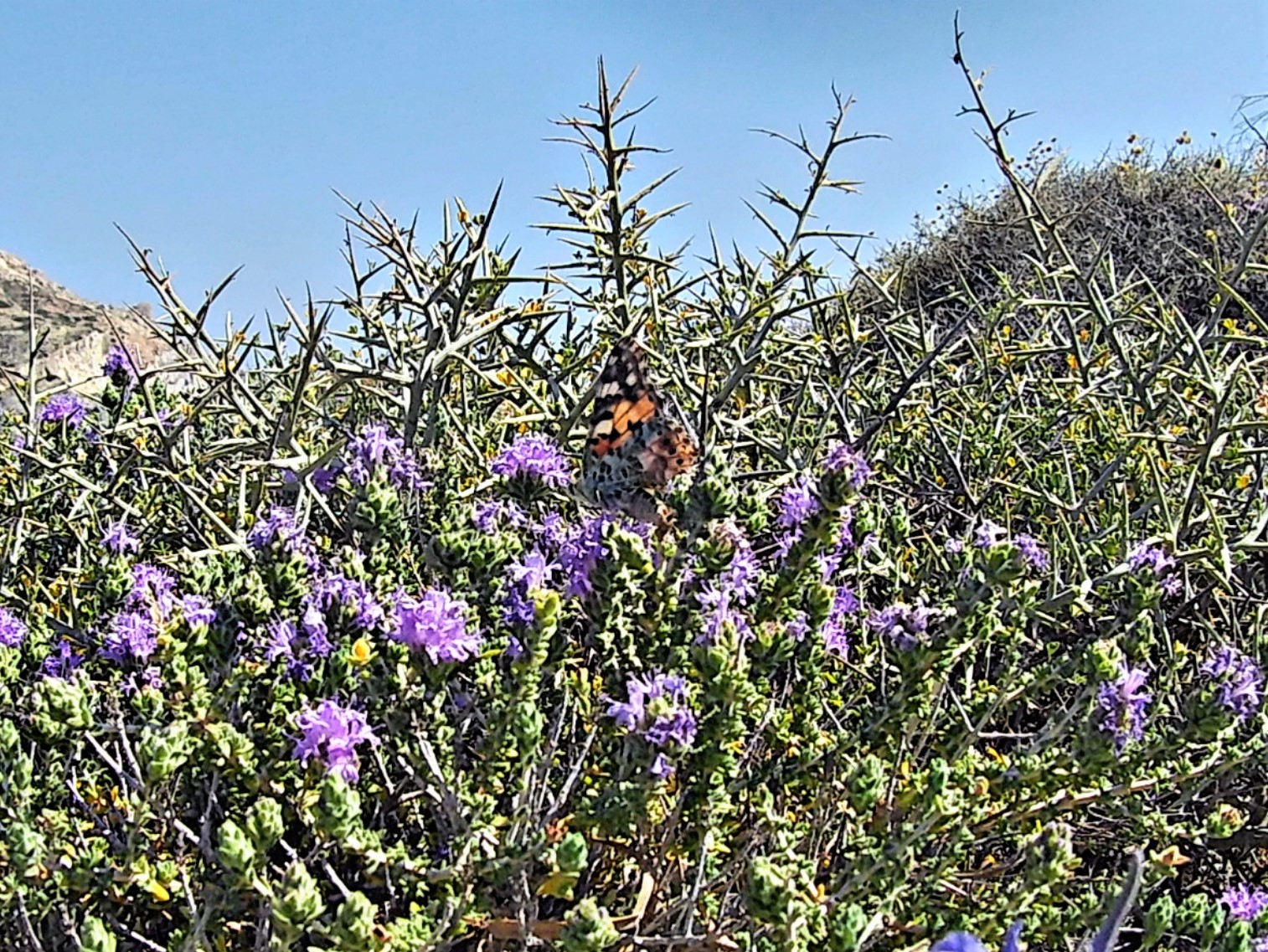 Farfalle lungo il sentiero tra Galifos e Agios Nikolaos
